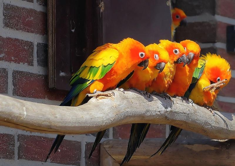Cepat Melatih Burung Beo Berbicara? Koleksi Masteran Burung Beo Perlu Dilakukan