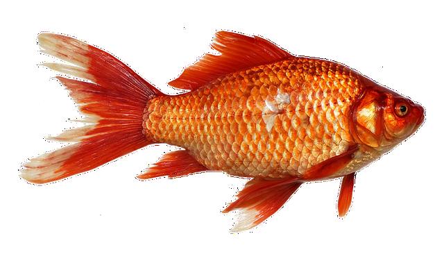 Cara Langsing Cepat dengan Ikan Yang Mengandung Omega 3
